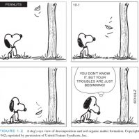 Le dessin précédent est une reprise d'un dessin de Charles M. Schultz, auteur de Snoopy.